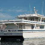 5 minutes drive to whale watch tours
