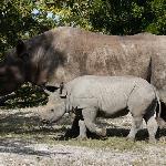 A big baby rhino - she was born 8/23/10