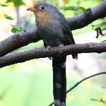 I loved this little bird in the Wings of Asia exhbit - Fantastic aviary