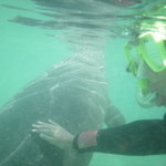 Florida Dolphin Tours - Day Tours