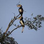 Hornbill @ Lodge