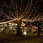 St. Augustine's Tree