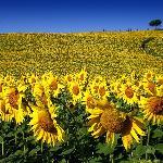 Fields around Villa Armena