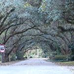 Canopy on Oak Street - right in front of the B&B