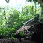 Niah caves around the corner, Treetops provides taxi & lunch