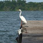 cranebird on the pier