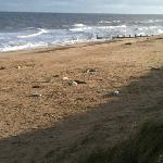 Seals at Waxham
