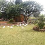 zeenath taj garden