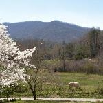 Spring horse pasture and mountain view