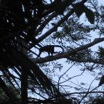 Monkeys in the trees outside our studio