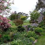 Garden setting at Kamahi Cottage