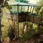 Tropical Treehouse Thumbnail