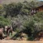 Addo Elephant Safari Lodge Thumbnail