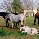 nuestros caballos