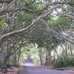 Gorgeous drive near Coconut Cottage