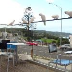 Dinner in Lorne with some company