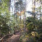 武蔵野の緑がかなり良く保存されています