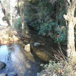遊水は水量豊かな小川に