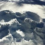 "Great ""snow angels!"""