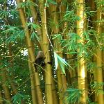 monkey hiding in the bamboo