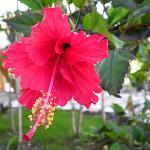 Shannas' Cove Flower Garden