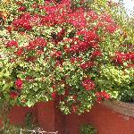 La Casa's beautiful flower garden