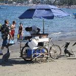 pelicans surrounding the shrimp vendor