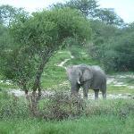 Foto de Elephant Sands Botswana