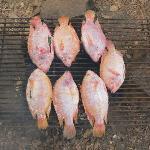 gegrillter, mit Gewürzen gefüllter,  Fisch