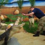 Brian the Keeper - hand feeding one of our giant Saltwater Crocodiles