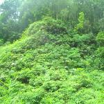 Sinharaja