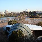 View of Ueno Park from my room.