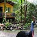 Rainforest Hideaway Thumbnail
