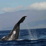 Delfin- og hvalsafari