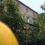 La Casa Dei Limoni