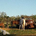 Foto de Lucieville Farm Chalets