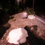 Photo de Flamingo Wildlife Habitat