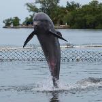 Dolphin fun #2