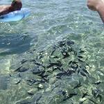 Fish spectacular