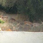 deer!:D♥