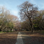 砧公園その3