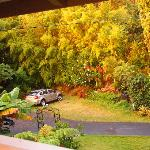Parking area at house in lush gardens.