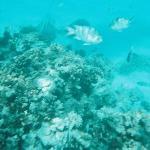マニャガハの海