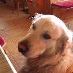 Sammy: il simpatico cane dell'hotel