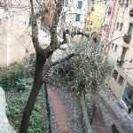 From Piazza Sarzano, looking down you can see in the crock of the tree Campio Pisano