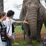 Acariciando los elefantes