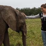 Jugando con los Bebes elefantes
