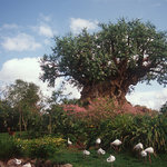 Disney's Animal Kingdom® Theme Park, ©Disney