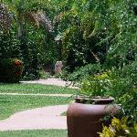 Part of the gardens at Cocos Beach