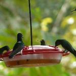 Surrounded by hummingbirds while eating